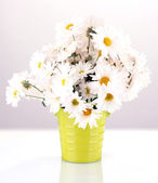 Daisies in vase isolated on white — Stock Photo