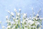 White wildflowers on color wooden background — Stock Photo