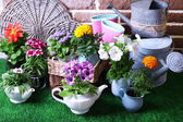 Flowers in  decorative pots and garden tools on green grass background — 图库照片