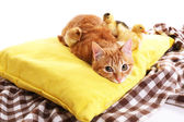 Red cat with cute ducklings and little chicken on yellow pillow close up — Stock Photo