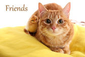Red cat with cute chicken on yellow pillow close up — Stock Photo