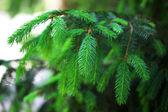 Ramoscelli di albero bello, all'aperto — Foto Stock