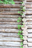 Wooden logs background — Stock Photo