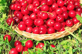 Sweet cherries on wicker stand on grass background — Photo
