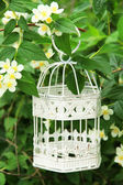 White vintage birdcage hanging on branch — Stok fotoğraf