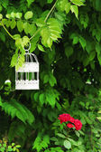 White vintage birdcage hanging on branch — Stockfoto