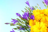 Beautiful wild flowers, on light blue background — Stock Photo