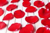 Beautiful petals of red roses — Stock Photo