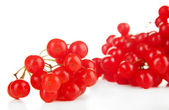 Red berries of viburnum — Stockfoto