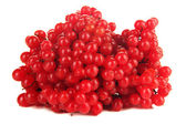 Red berries of viburnum — 图库照片