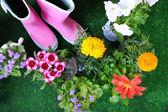 Flowers in  decorative pots — Stok fotoğraf