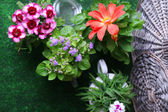 Flowers in  decorative pots and garden tools — Foto Stock