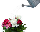 Water can watering flowers — Stock Photo