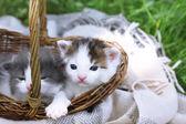 Cute little kittens in basket — Stock Photo