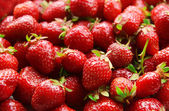 Strawberries close-up — Stockfoto
