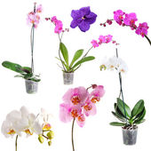 Collage of beautiful orchids — Stock Photo