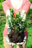 Gardener planting tree in spring — Stock Photo