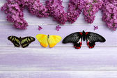 Beautiful butterflies and lilac flowers — Stock Photo