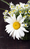 Beautiful bouquet of daisies — Stock Photo