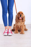 English cocker spaniel and owner in room — Stock Photo