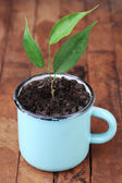 Young plant in mug — Stock Photo