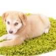 Little cute Golden Retriever puppy on green carpet, isolated on white — Stock Photo #48739989