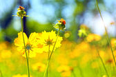 Spring flowers, outdoors — Stock Photo