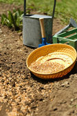 Sowing seeds into soil — Foto de Stock