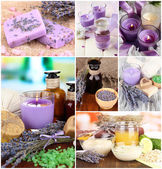Lavender collage — Stock Photo