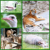 Zoo collage — Stock Photo