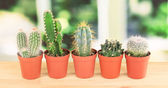 Collection of cactuses — Stock Photo