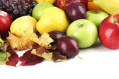 Different fruits with yellow leaves — Stock Photo