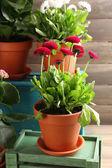 Beautiful flowers in flowerpots — Stock Photo