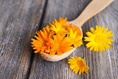 Calendula in wooden spoon on table close-up — Stock Photo