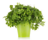 Colorful bucket with parsley and dill — Zdjęcie stockowe
