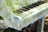 Garden with pond and piano — Stok fotoğraf