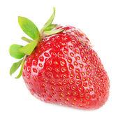 Mogen söt jordgubbe — Stockfoto