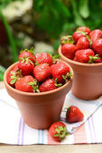 Ripe sweet strawberries in pots — Stock Photo