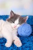 Cute little kitten lying on blue carpet — Photo