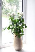 White roses in vase against window — Stock Photo