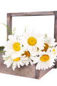 Flowers in crate — Stock Photo
