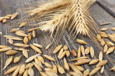 Rye grains and ears — Stock Photo
