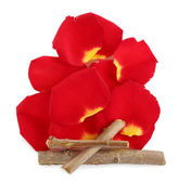 Bonfire laid out from petals and branches — Stock Photo