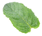 Mint leaf — Stock Photo