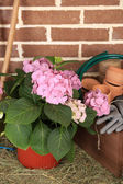 Tools of gardener and flowers — ストック写真