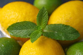 Lemons and limes with mint, close up — Stock Photo
