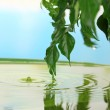 Green leaves with reflection in water — Stock Photo #49347447