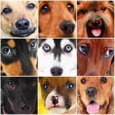 Collage of different cute dogs — Stock Photo