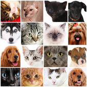 Collage of different cute pets — Stock Photo