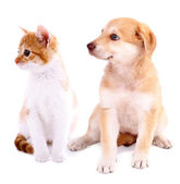 Little kitten and retriever puppy isolated on white — Stock Photo